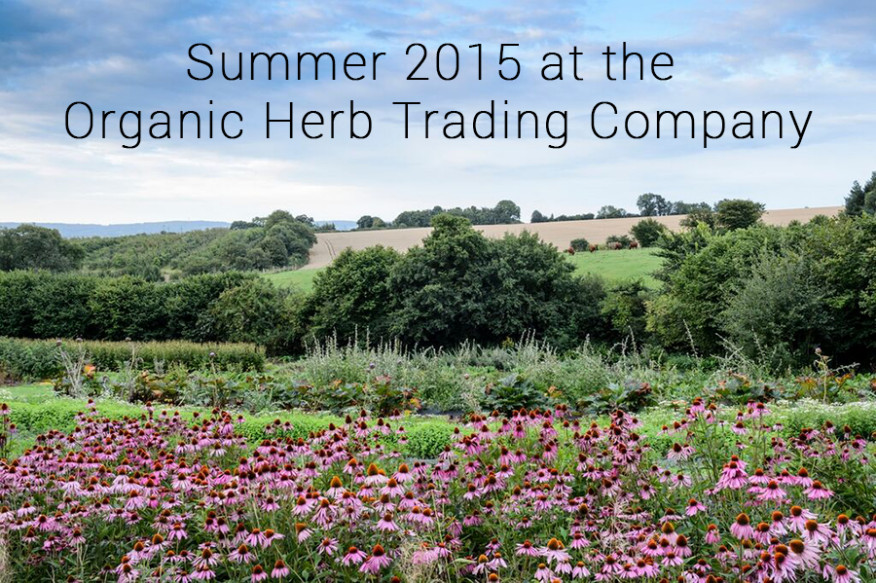 Summer at the Organic Herb Trading Company