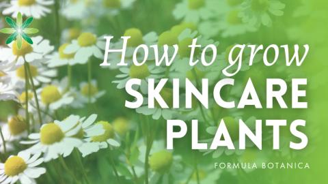 How to Grow Skincare Plants