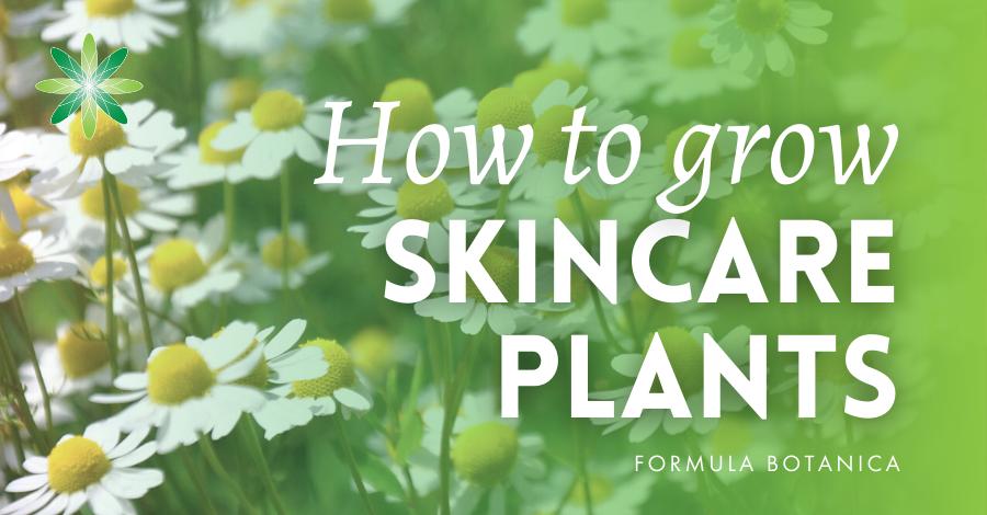 2016-05 How to grow skincare plants