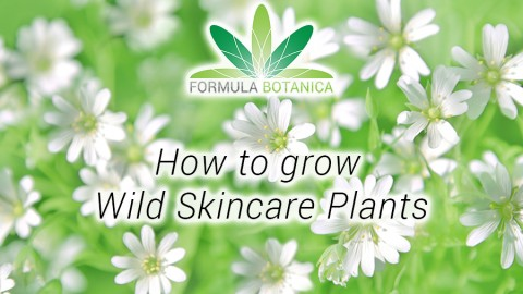 How to Grow Skincare Plants