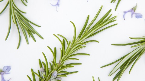 How to use Rosemary in Natural Skincare