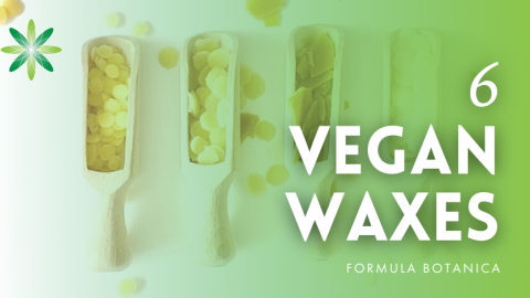 6 Vegan Waxes for Organic Cosmetic Formulations