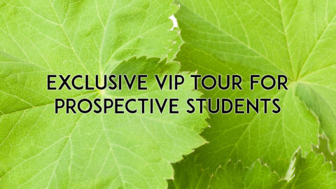 Winter Term Enrolment: VIP Tours for Prospective Students