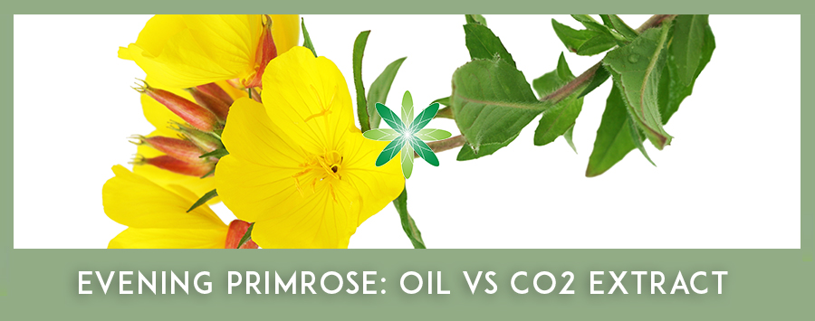CO2 Extracts - Evening Primrose