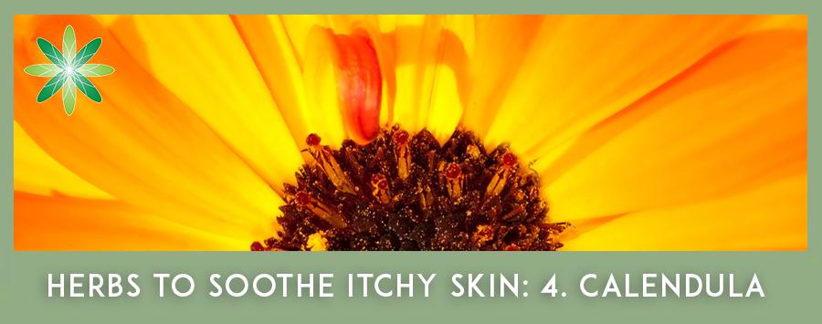 Itchy Skin Herbs - Calendula