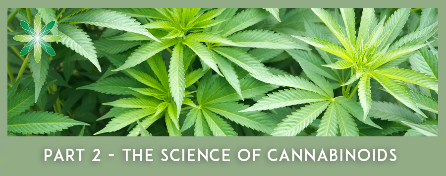 Science of Cannabinoids and how do they work