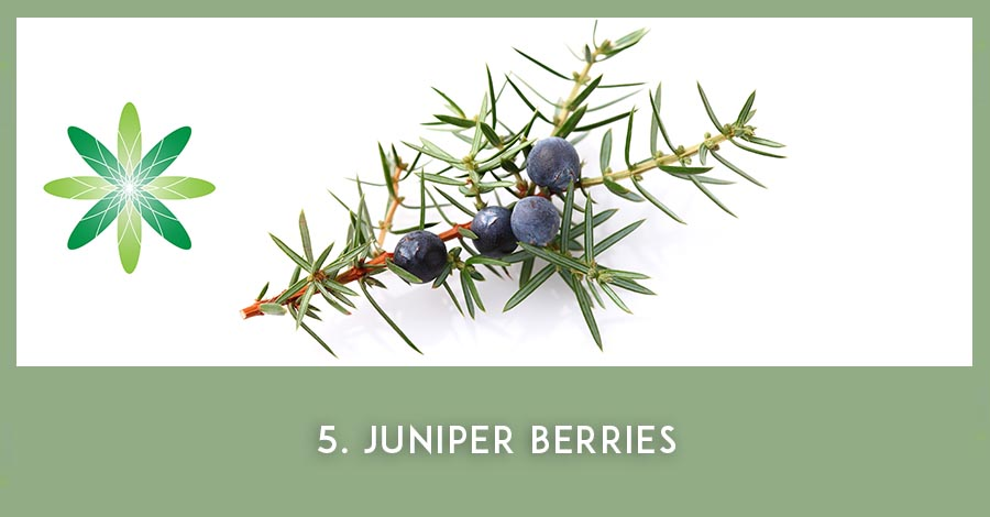 Juniper berry oil - Nordic beauty ingredients