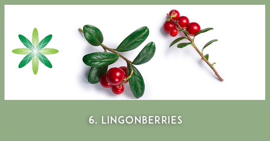 Lingonberries - Nordic beauty ingredients