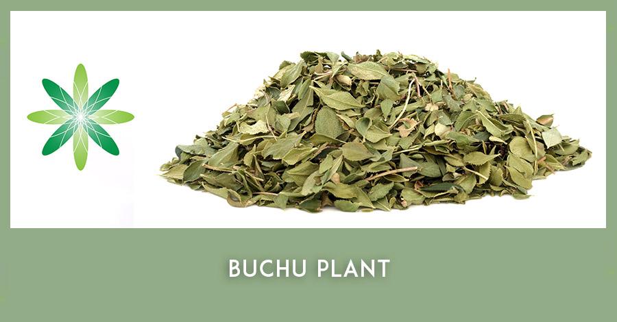 Buchu African ingredient