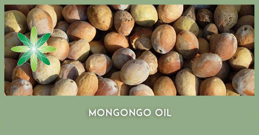 Mongongo manketti tree oil nuts