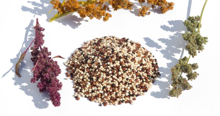 2021-08 hydrolysed quinoa peptides